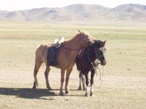 モンゴルの名もない馬